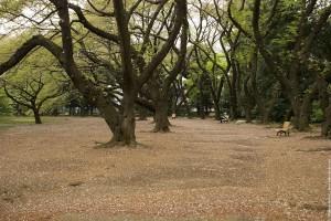 Allée bordée d'arbres dans les jardins de Shinagawa