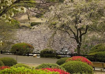 Mare du jardin de Shinagawa