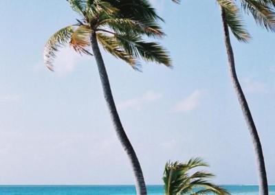 Cocotiers au vent aux Maldives