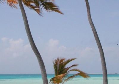 Palmiers au vent aux Maldives