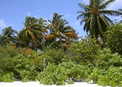 La végétation aux Maldives