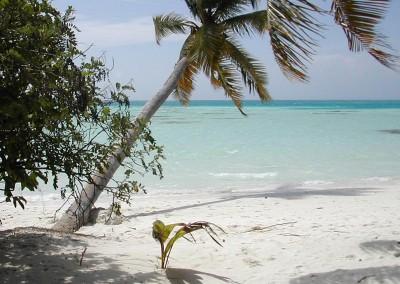 Rivage aux Maldives