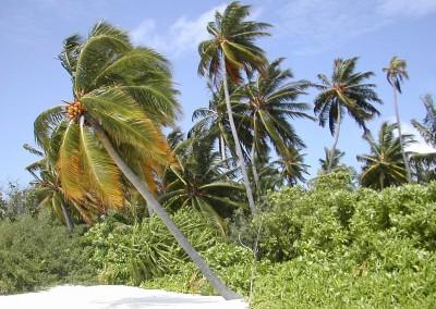 Plages aux Maldives et cocotiers