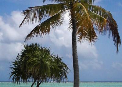 Un rivage aux Maldives