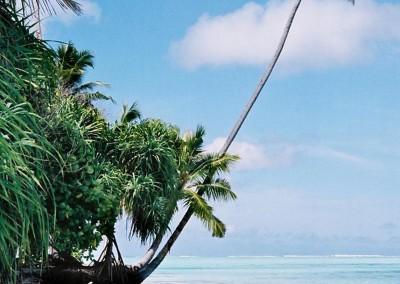 Plage et cocotiers aux Maldives