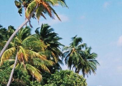 Vegetation sur une plage aux Maldives