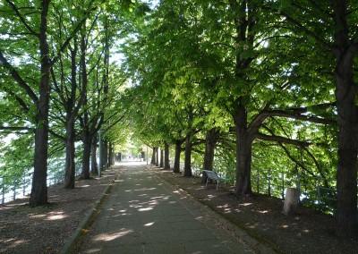 L allee des cygnes bordee d arbres