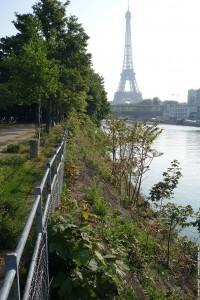 ile aux cygnes et la tour Eiffel