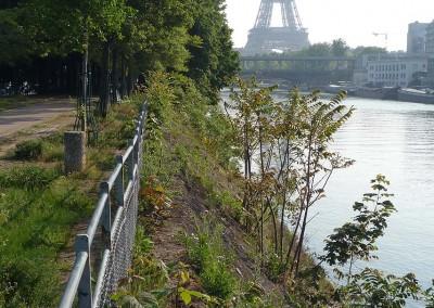 L ile aux cygnes et la tour Eiffel