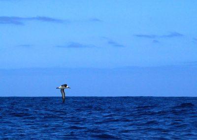 Bruny Island, Tasmanie