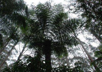Végétation australienne