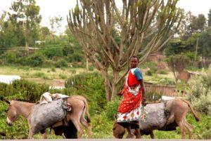 Sur la route au Kenya